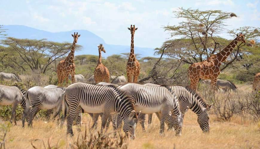 Image result for 7 Days Mara Nakuru Samburu.Safari