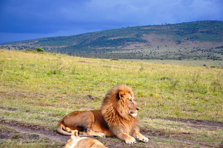 masai mara 3 days 2 nights flying package