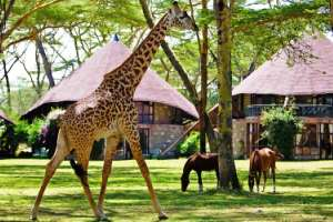 Bountiful Safaris | Top Holidays Deals | Kenya & International