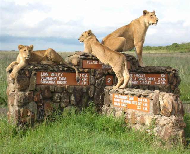 Five interesting Facts about Nairobi - Bountiful Safaris